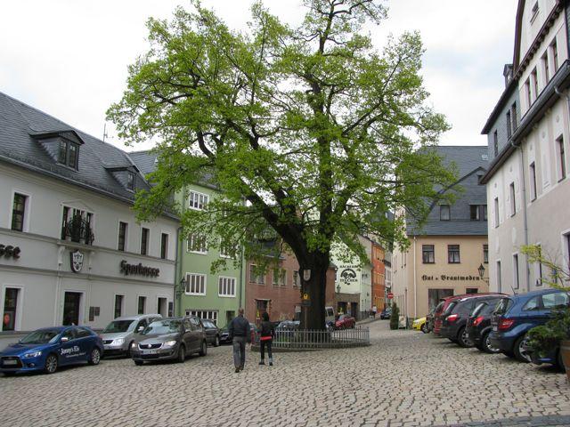 Königseiche Schwarzenberg am Unteren Markt