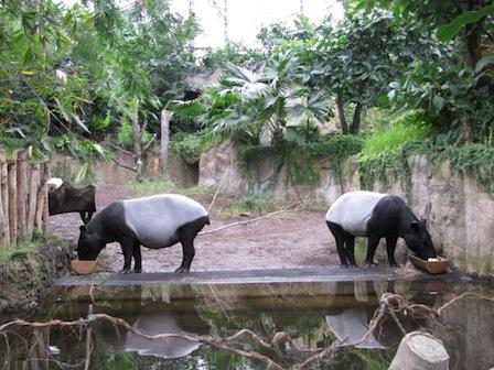 Tapir Zoo Leipzig