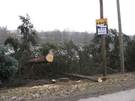 Straße der Einheit, Bäume gefällt