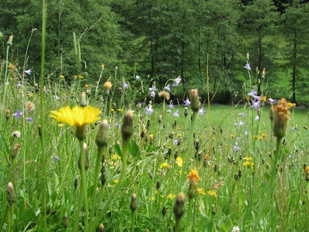 Sommerwiese