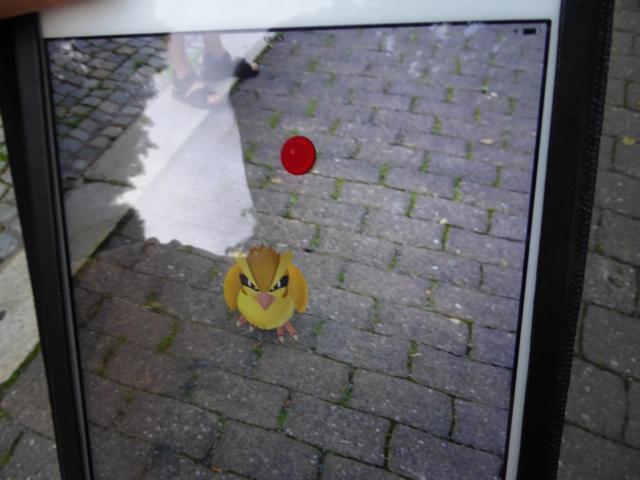 P1090867_pokemon